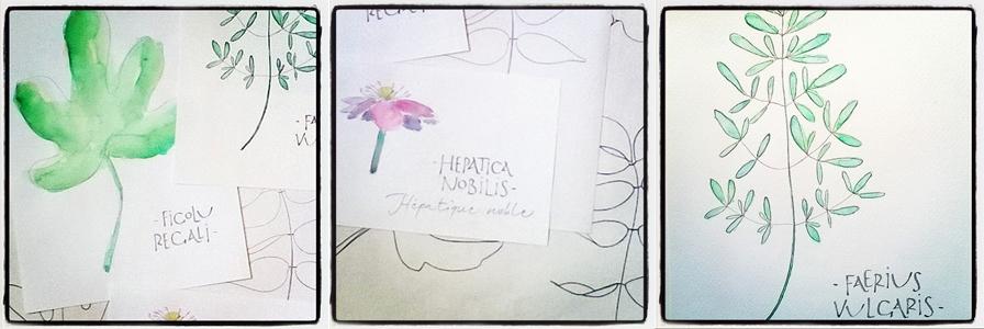 herbier-imaginaire